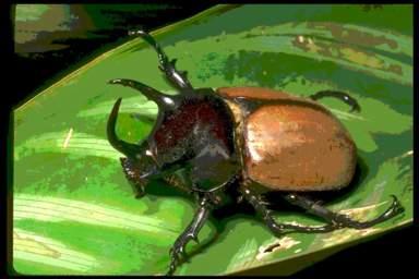 classe de cm1 cm2 le monde des insectes. Black Bedroom Furniture Sets. Home Design Ideas
