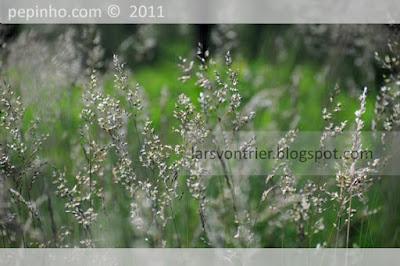 Primavera en el parque del Pedroso