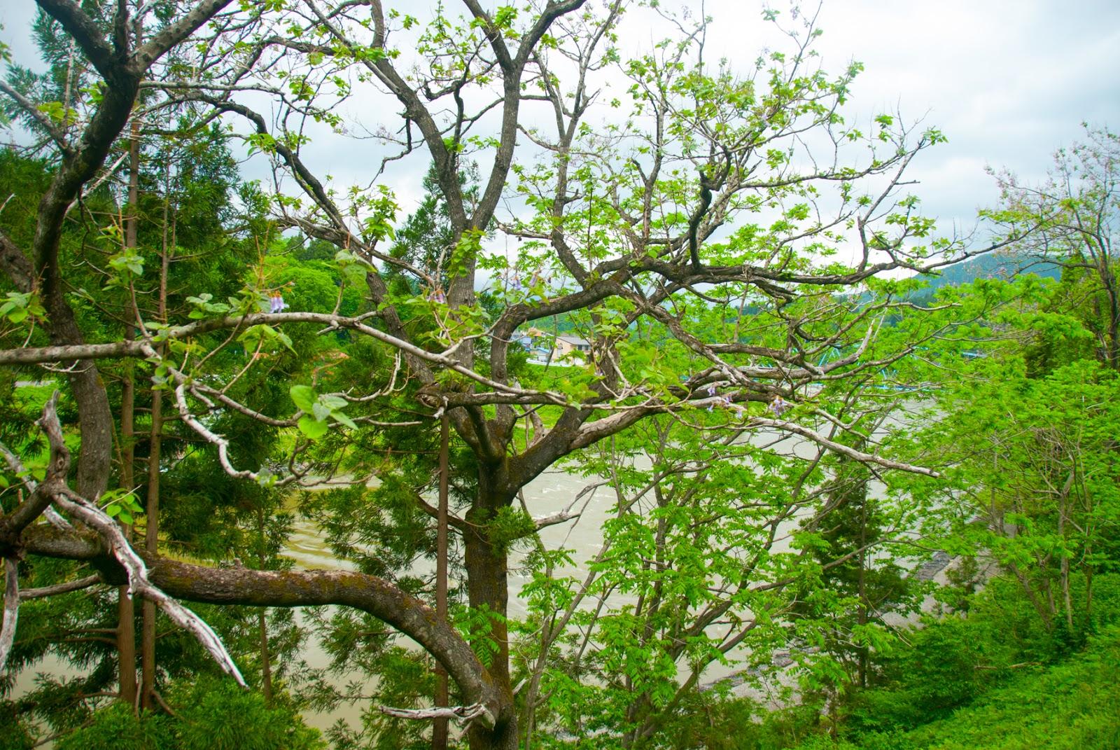 川沿い 木々