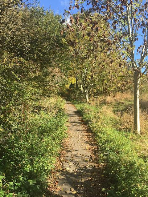 october 2015 walk