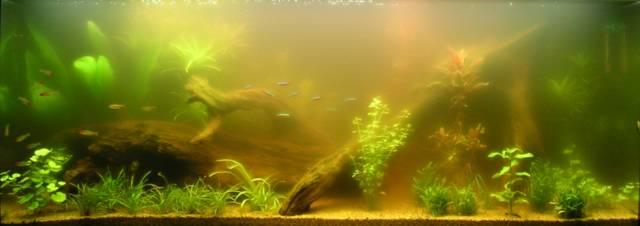 La vie de mon aquarium eau verte for Algues vertes dans piscine