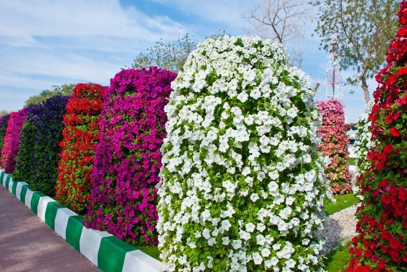 CULTIVO A VIDA~ Plantas Para Jardins Umidos