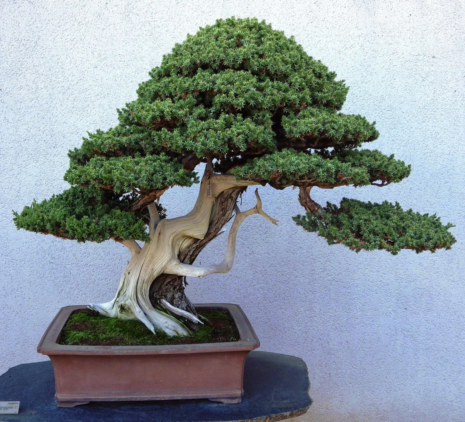 Bespoke Bonsai Stands More Trees From Luis Vallejo39s Estudio