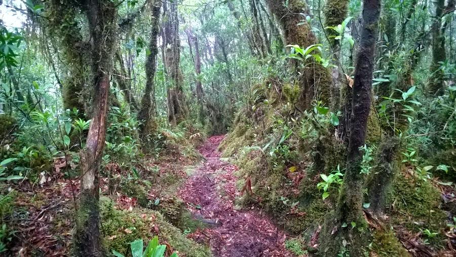 Jalan menuju puncak Salahutu