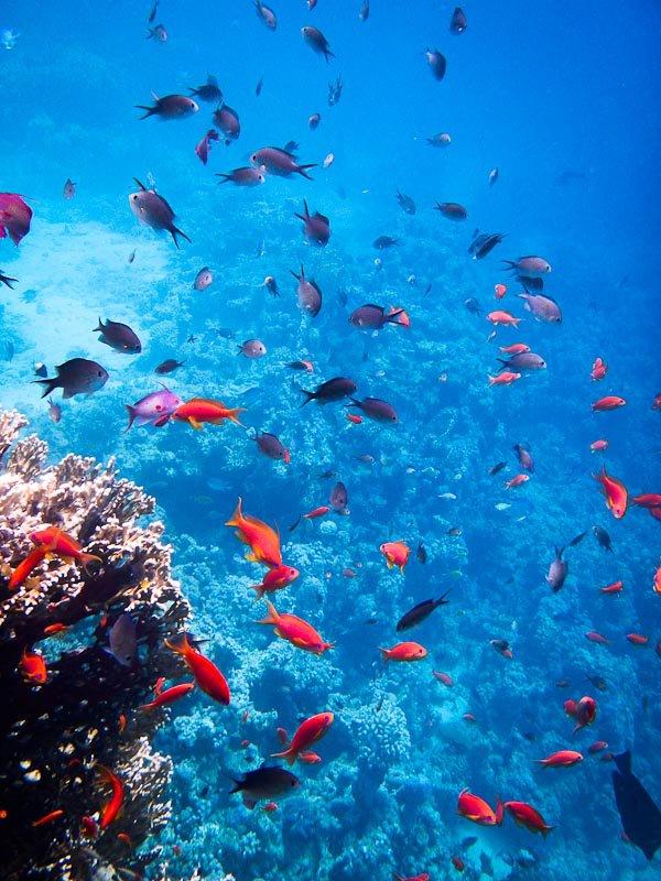 Snorkeling In The Red Sea Takin A Magic Carpet Ride