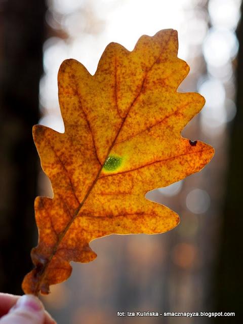grzyby , las , grzybobranie , złota polska jesień , czubajki gwiaździste , podgrzybek brunatny , jesienny las , spacer , prosto z lasu , wycieczka , liście , kolory jesieni