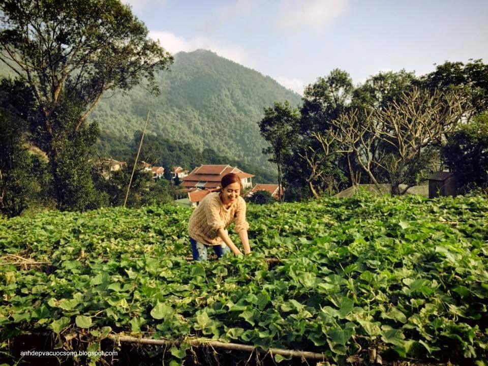 Ca sĩ Hoàng Thùy Linh nô đùa bên vườn rau 5