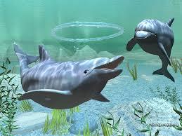 Pengen Tahu ? Apa Makanan Lumba-lumba? | Ini infonya