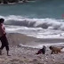 بالفيديو.. كلب يتحول إلى بطل بعد منعه رضيعا من الغرق