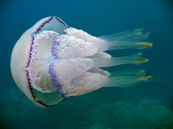 Лечение суставов медузами корнерот суставная блокада при артрозе