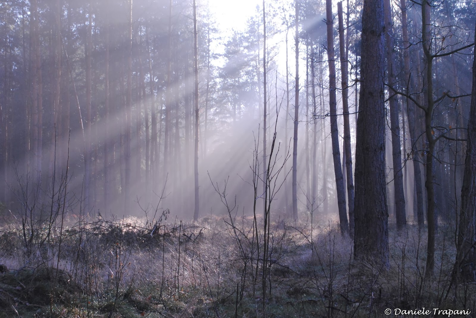 Una mattina nel bosco. Raggi del sole nella nebbia