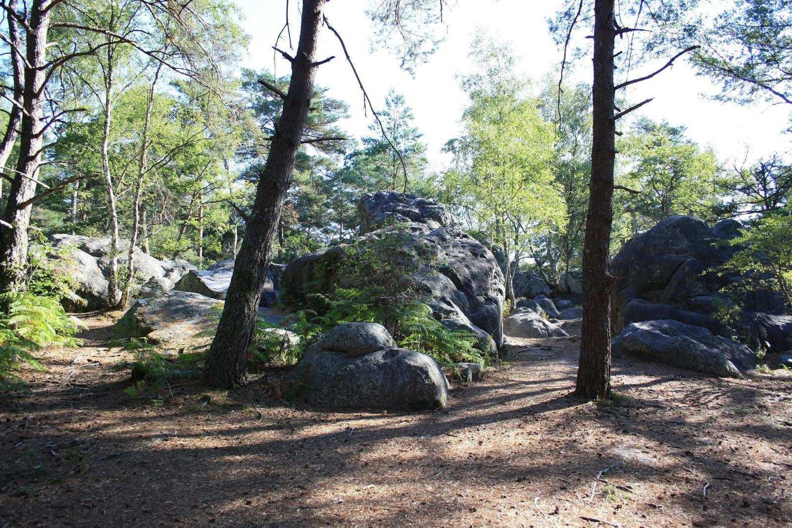 La gazette de bibi rocher saint germain for Piscine fontainebleau
