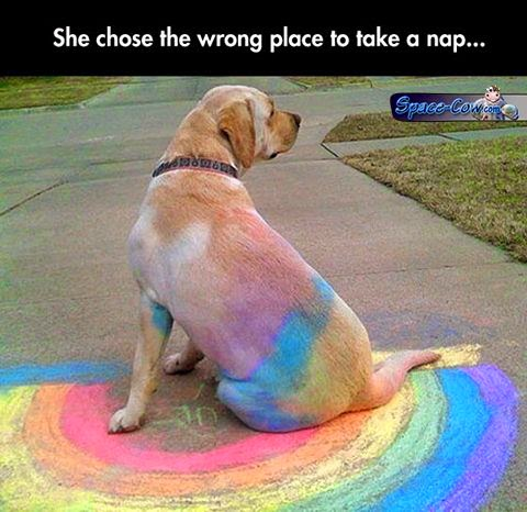funny dog rainbow picture