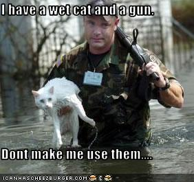 Funny Cats With Machine Guns Crazy Cat Pictures