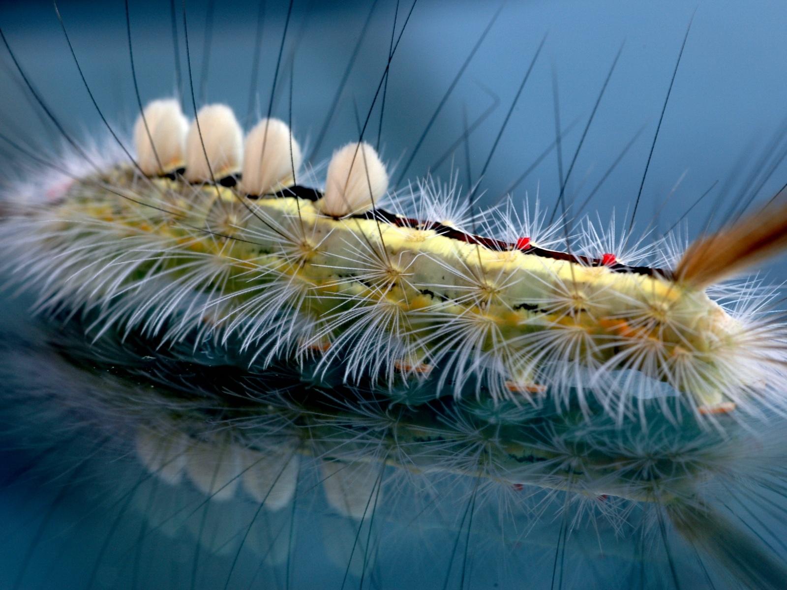 http://4.bp.blogspot.com/-qXzxZBAoWjg/TZJfxTy25oI/AAAAAAAAAe8/m-wbc8iaUxs/s1600/animal_014.jpg