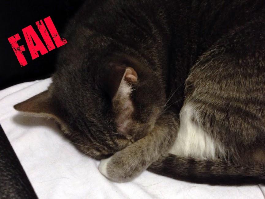 Epic Fail Cat Win Epic Fail Spy Cat