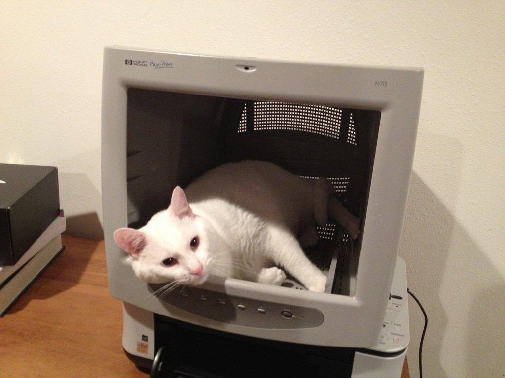 Кот в мониторе - самое место для кота!