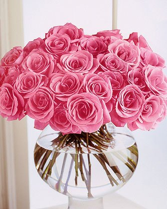 Beautiful Pink Roses Flowers Collections 25