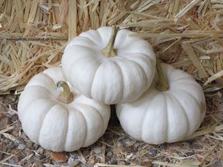 https://upload.wikimedia.org/wikipedia/commons/1/1b/Cucurbita_pepo_small_edible_mini_White_Pumpkins_9.11.jpg