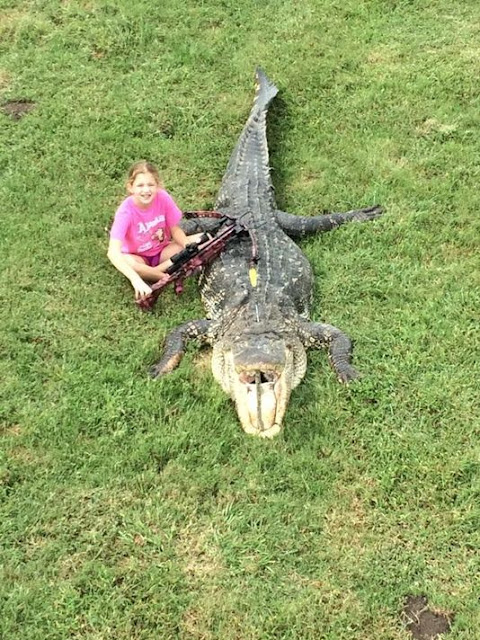 http://www.khou.com/story/news/local/animals/2015/10/06/ten-year-old-girl-takes-down-13-foot-gator/73485412/