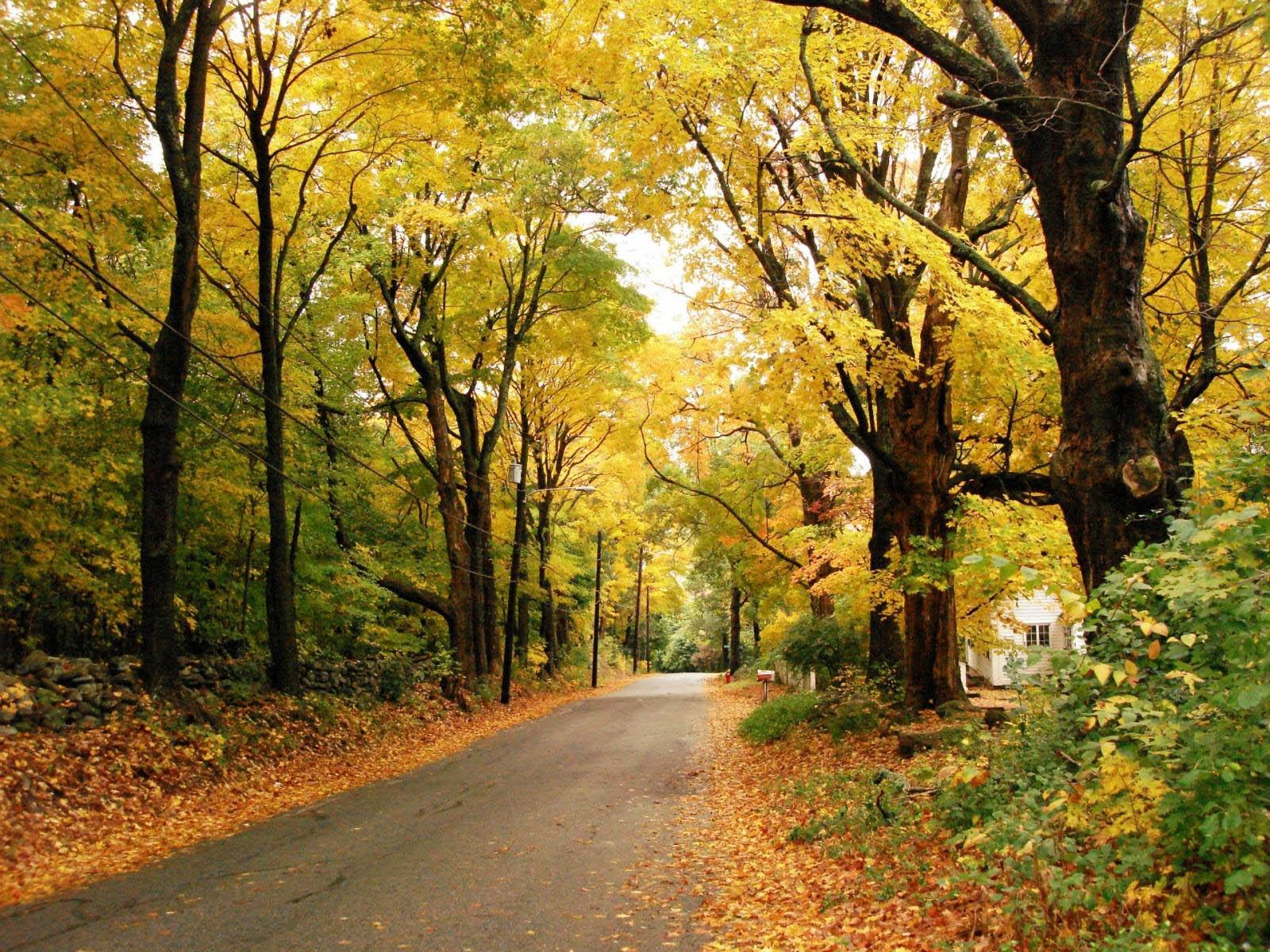 wallpaper: super Autumn Scenery Wallpapers