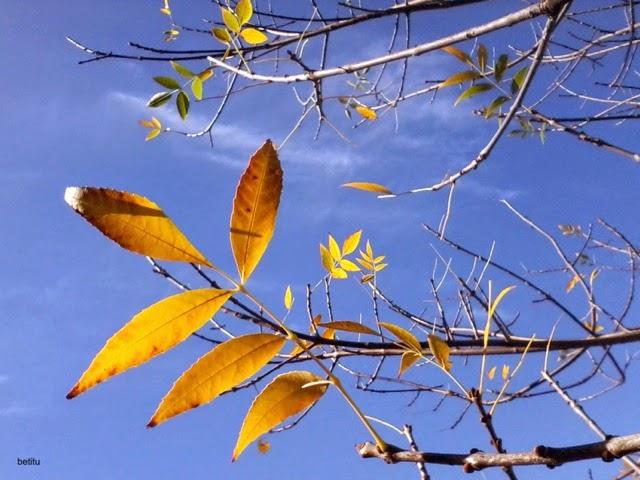 Autumn colors by betitu