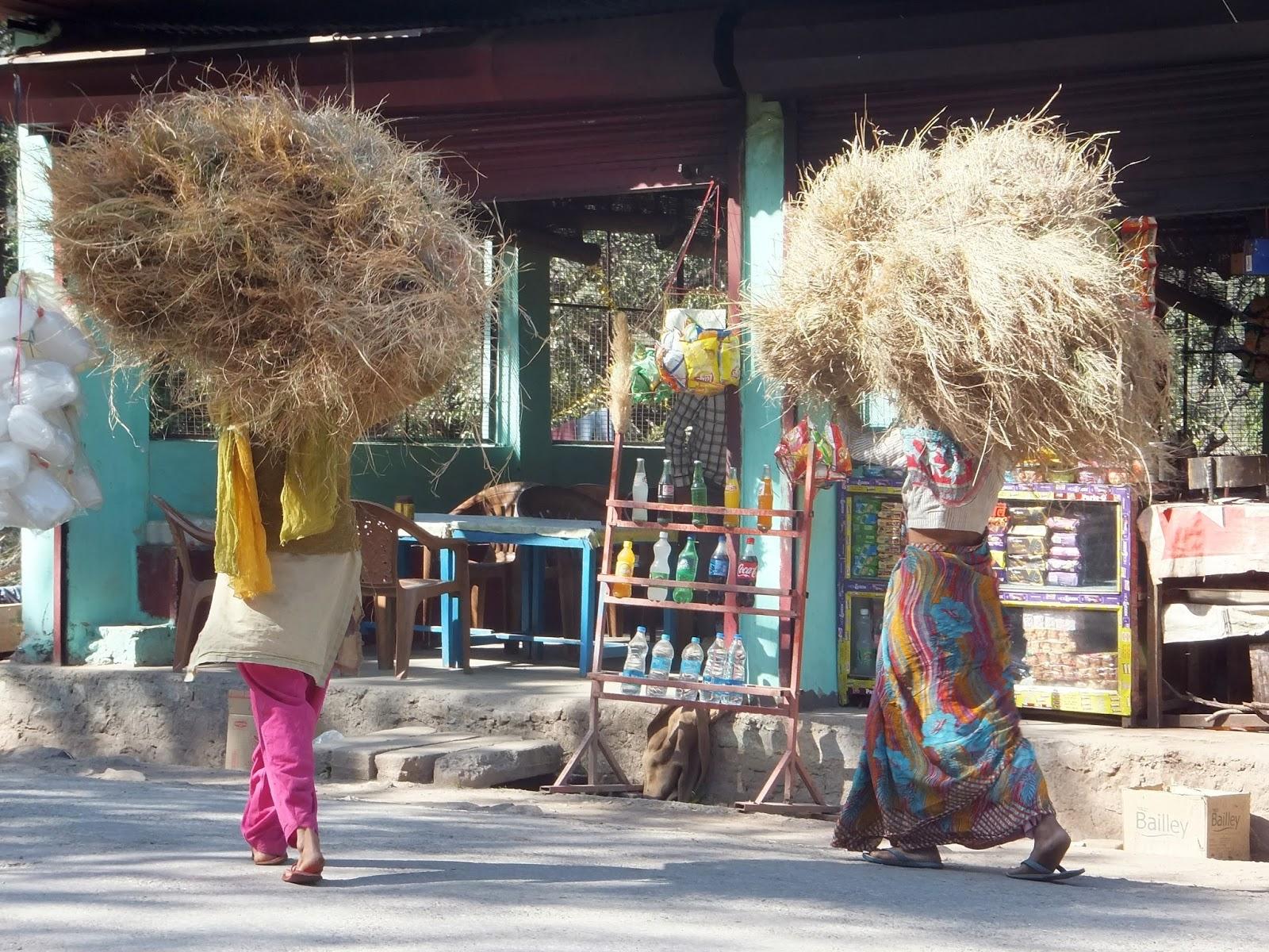 Индийские женщины несут на голове охапки сена