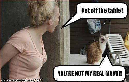 Funny Cat Mom Photo Image