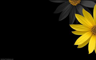 HD flower desktop wallpaper