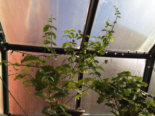 Plantas resistentes a los venados | Perennials de la prueba de los ciervos | Jardines agraciados