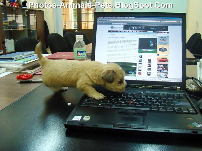 http://4.bp.blogspot.com/-qaEtVqpBQoo/ThlQ-fs_PBI/AAAAAAAABoY/TzCpUeaNpI4/s1600/Cute%2Bdogs%2Bpictures_0002.jpg