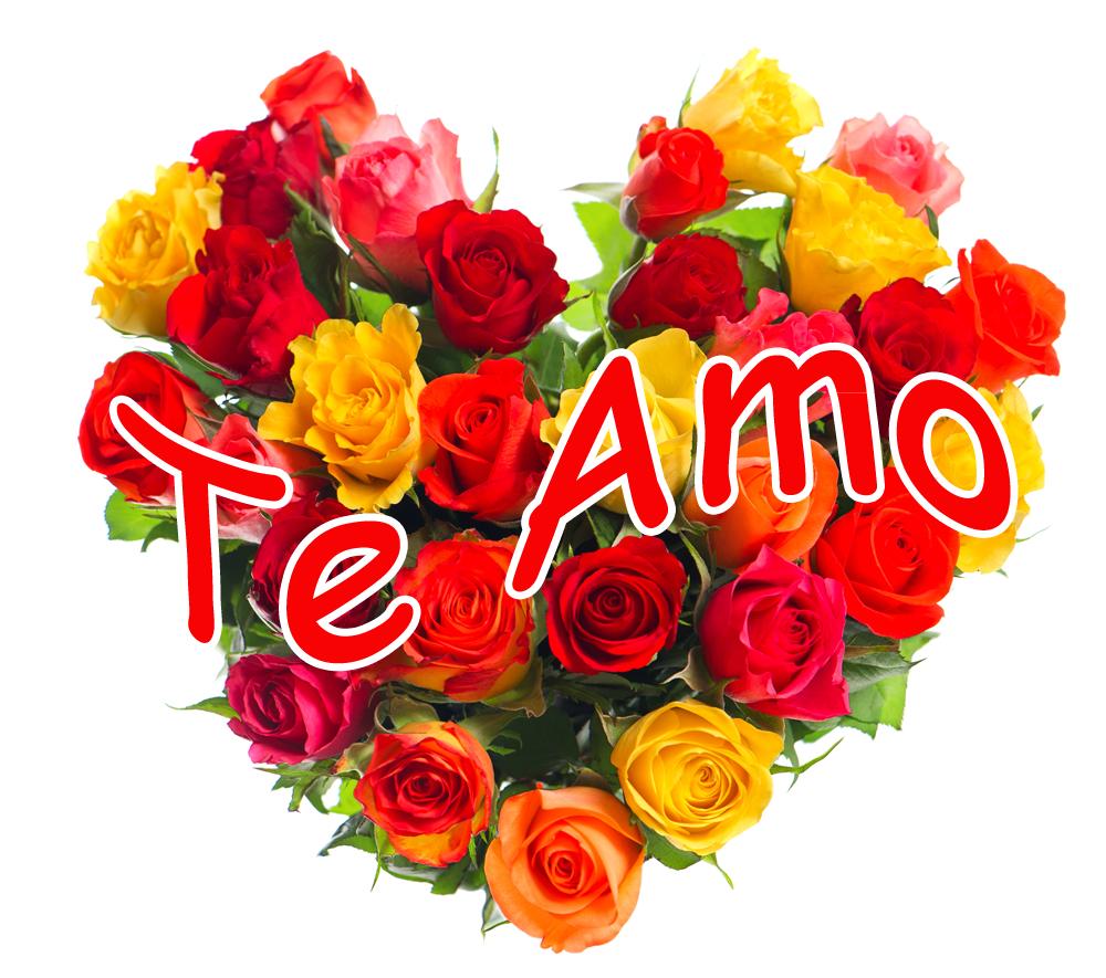 Imagenes De Rosas Con Frases Gratis 5 Imagenes de hermosas rosas con frases cortas