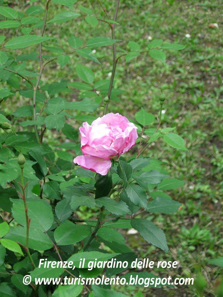 Turismo lento firenze go slow il giardino degli iris e il giardino delle rose - Il giardino delle rose ...