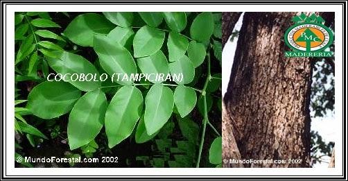 cocobolo-maderas-exoticas-duras-venta-maderas-cuale-vallarta-mexico