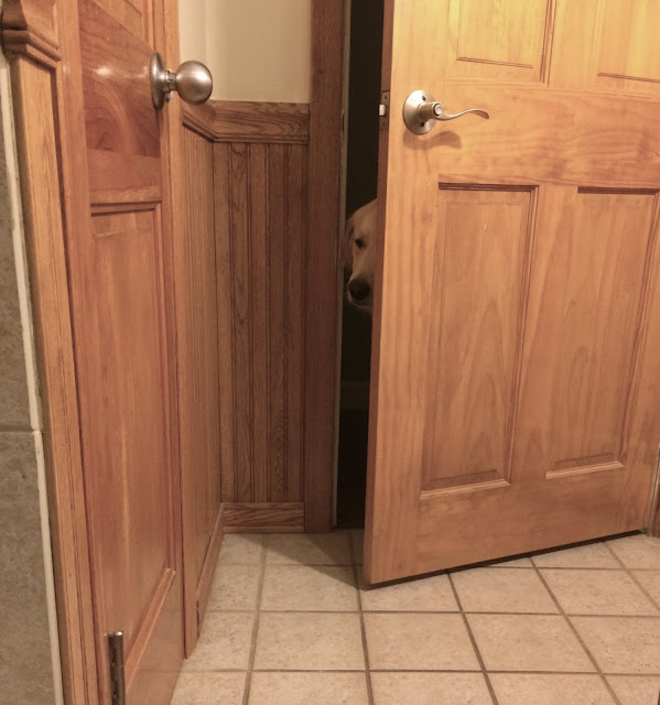 Dog waiting outside bathroom door wordless wednesday