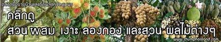 ขายสวนผลไม้ผสม สวนเงาะ สวนลองกอง สวนมังคุด จังหวัดชุมพร