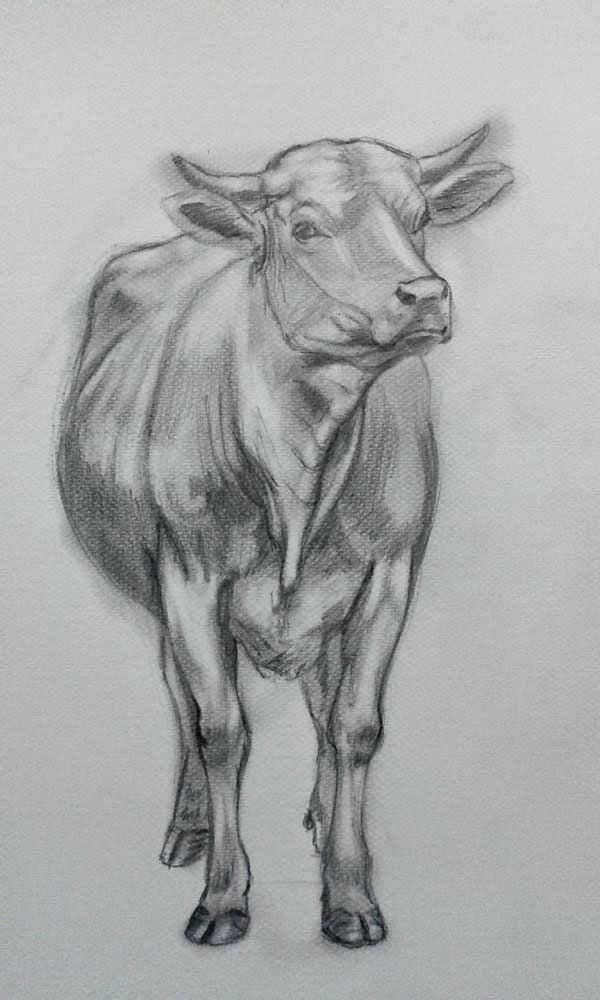 graphite cow