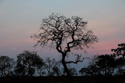 Paisagem do Cerrado na estação seca promove belas silhuetas