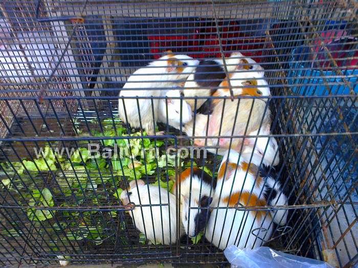 Satria Bird Market Denpasar