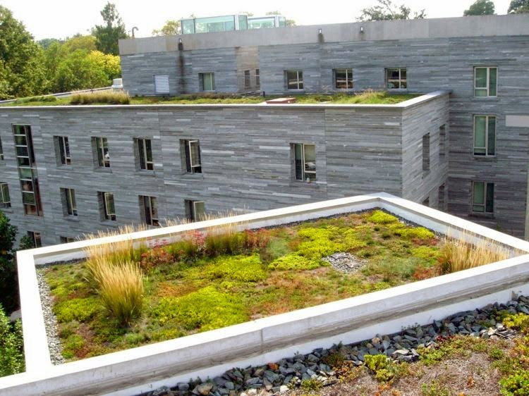 eco friendly green roofs green roofs are the future. Black Bedroom Furniture Sets. Home Design Ideas