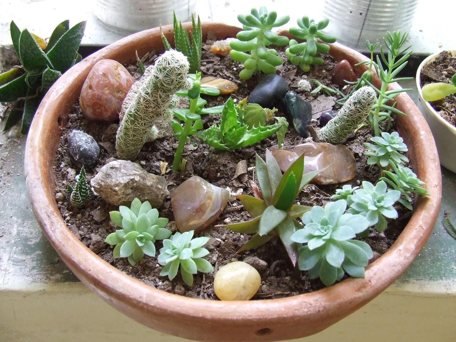 time is for the birds mini succulent rock garden