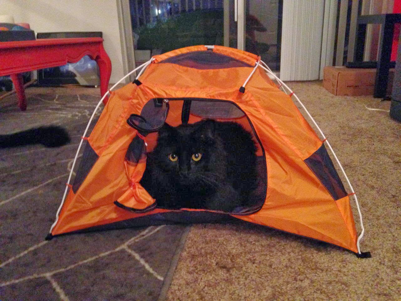 Funny cats - part 97 (40 pics + 10 gifs), cat pictures, cat sits in small tent