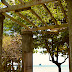 Back To Nature At The Tamarind Tree Resort