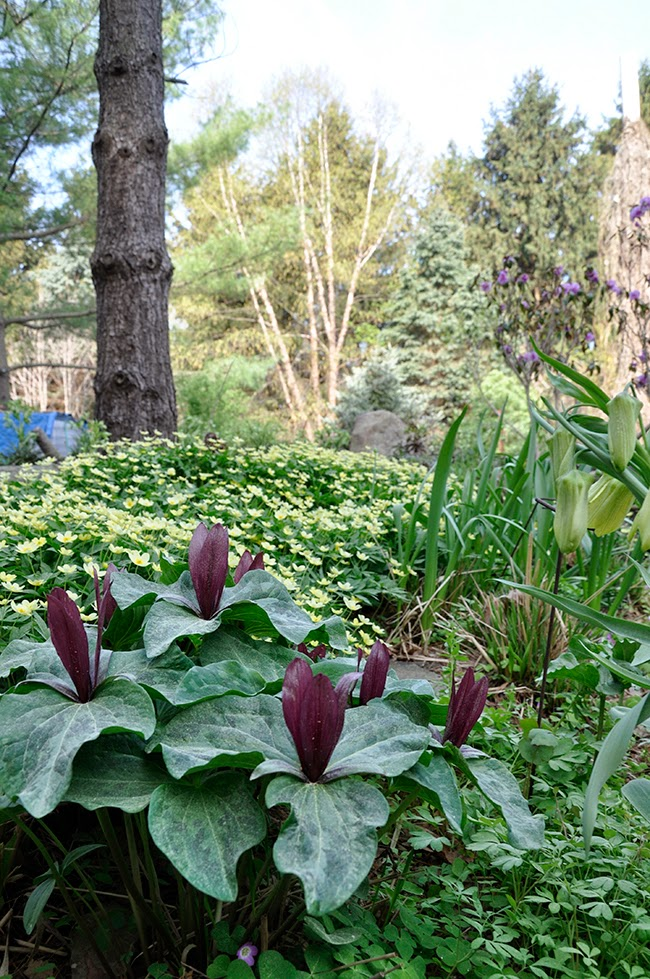 Growing with plants three rock garden tours at the nargs for Landscaping rocks ann arbor