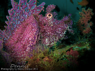 Anilao Diving Underwater Photography |Dive Resort,Dive Package