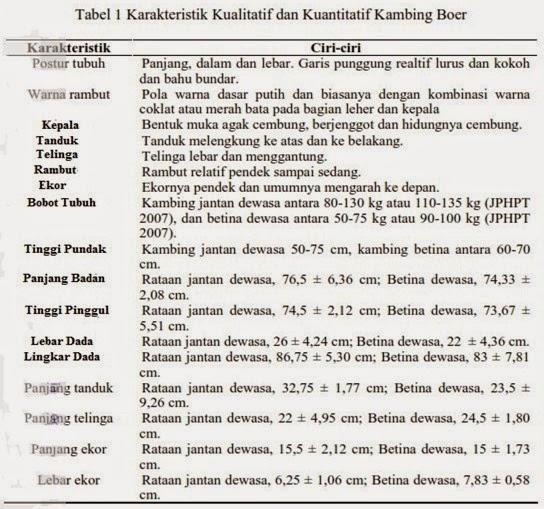 KARAKTERISTIK KAMBING BOER
