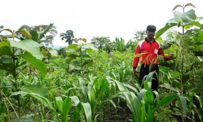 Penyuluhan Dan Komunikasi Pertanian Sistem Pertanian Terpadu Dan