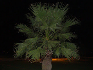 Night Palm tree - Sant Carles de La Rápita