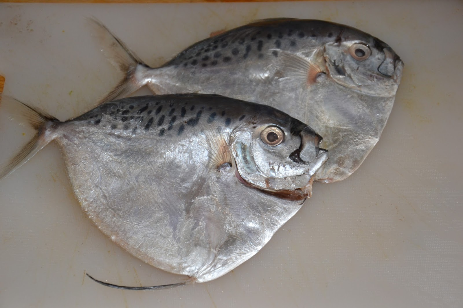 fiskearter i saltvann