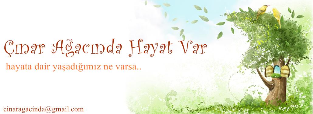 Çınar Ağacı                                                      .